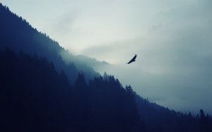 animals___birds_eagle_in_the_fog_on_background_with_mountains_057742_